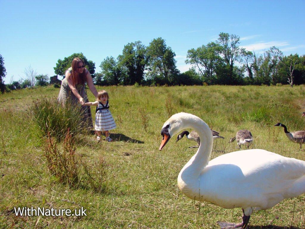 Meeting the wildlife
