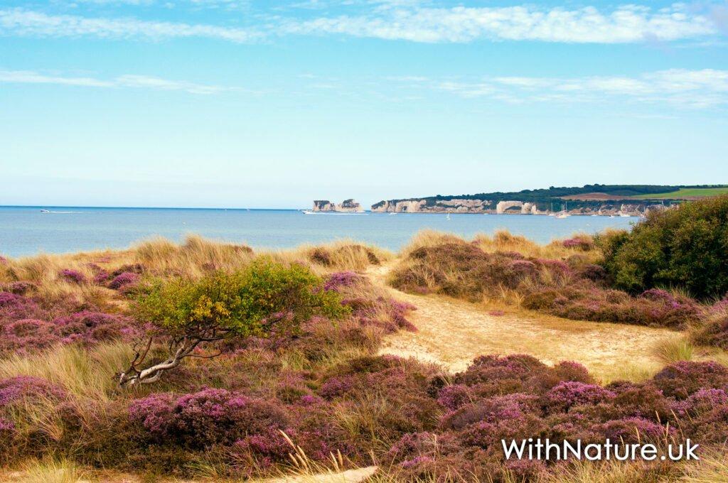 Dorset Coastline, England
