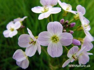 Macro Wildflowers
