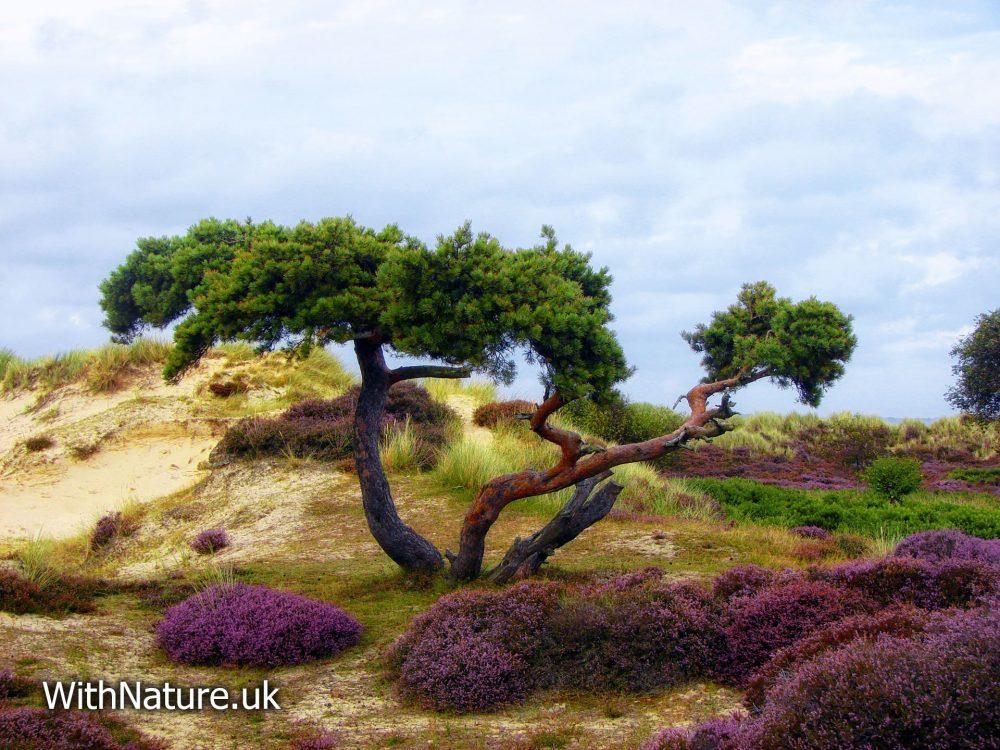 Studland Nature Reserve, Dorset