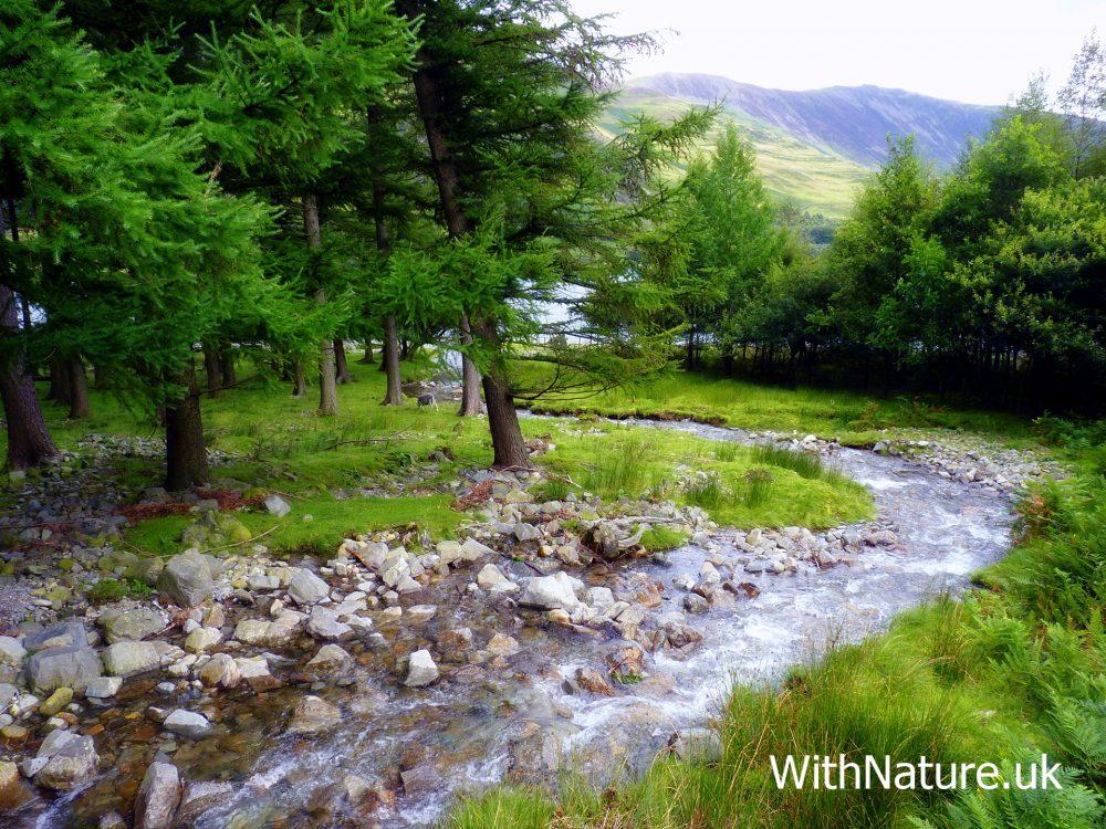 Winding Beck, Buttermere