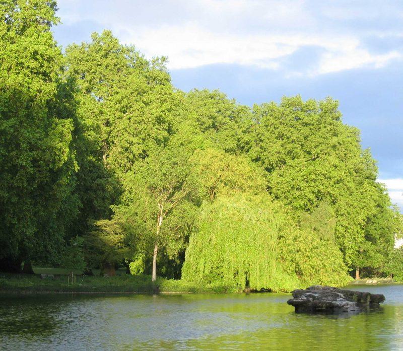 A London Park in sunlight